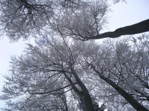 Versipel Collective: Winter Night12/2/18!