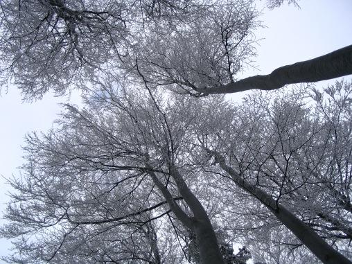 trees-1560581